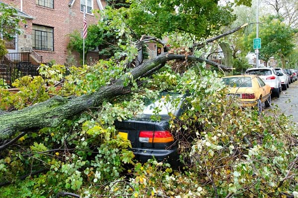 Car destroyed by a fallen tree blown over by heavy winds