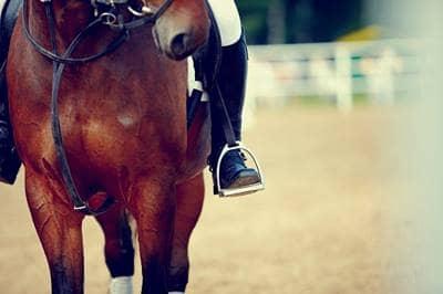 General liability horse insurance