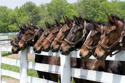 Homeowner vs commercial equine